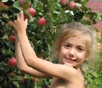 Девочка срывает яблоки