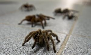 Много пауков