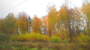 Осень за окном поезда