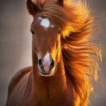 К чему лошадь может сниться для девушки