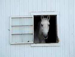Белая лошадь в окне