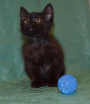 Бурый котенок