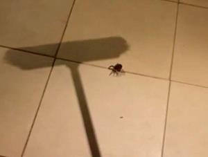 Убить паука
