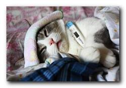 Котенок болеет