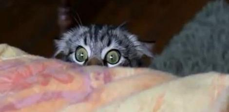 Испуганый кот