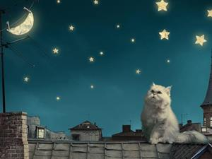 Белый кот на крыше