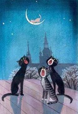 Коты кричат на крыше