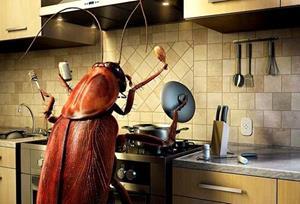 Тараканы дома