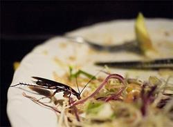 Таракан в салате