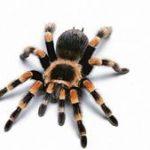 Как растолковать по соннику сон, в котором вас укусил паук