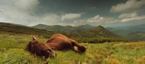 Мертвая лошадь