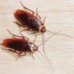 К чему по соннику снится много тараканов