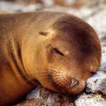 Что значит морской котик во сне: спросим у сонника