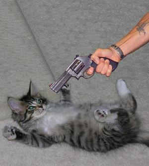 Убить кошку