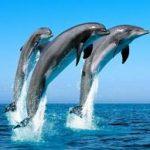 Попробуем растолковать, к чему снятся дельфины