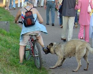 Собака кусает девушку