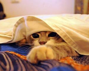 Котенок в постеле