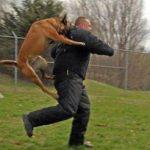 Если собака нападает во сне, что это значит по соннику?