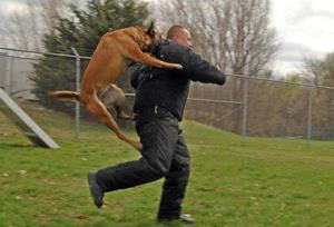 Собака нападает