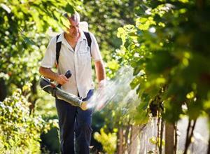Обрабатывать виноград