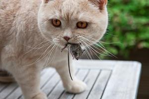 Поймала мышь