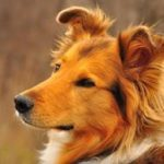 Что означает рыжая собака по соннику