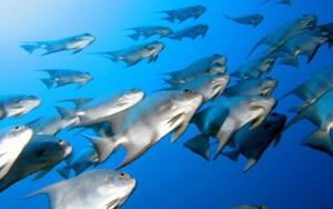 Рыбы в воде