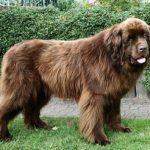 Как понять, к чему снится большая собака