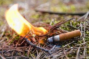Сигарета в лесу
