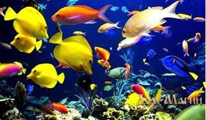 Рыба в океане