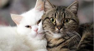 Ухоженные коты