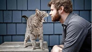 Кошка обступила человека