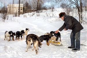 Сонник кормить бездомных собак фото
