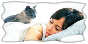 Женщина видит кошку во сне