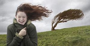 Ветер, раскачивает дерево