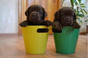 Играть дома с щенками