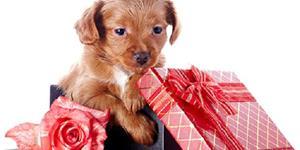 Подарок собака