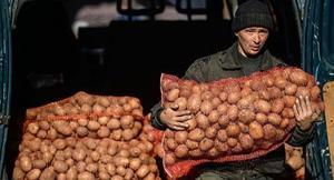Несет мешки с картошкой