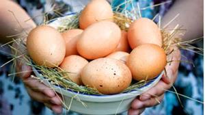 Яйца на продажу