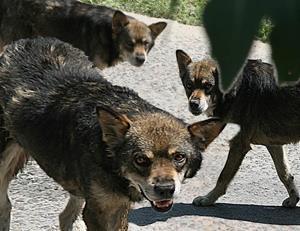 Собаки нападают