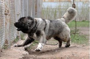 Собака - охранник