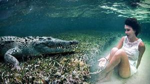 Крокодил нападает во сне