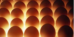 Во сне куриные яйца