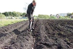 Копать картошку