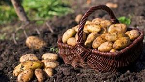 Благоприятная почва