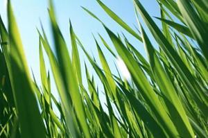 Высокая трава