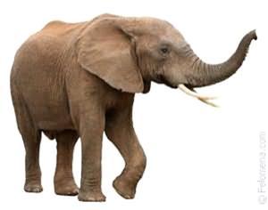 Снится слон