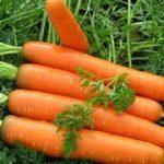 Как растолковать, к чему снится морковь