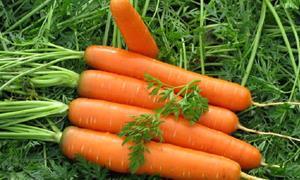 Снится морковь