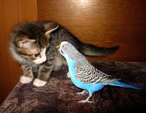 Котёнок и попугайчик